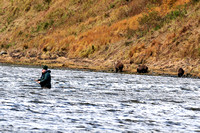 Fishermen and Bears After The Same Salmon 1