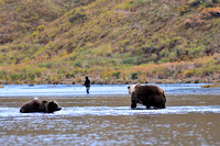 Fishermen and Bears After The Same Salmon 5